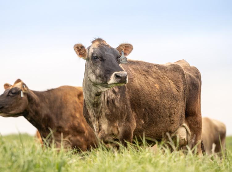 Livestock_Web