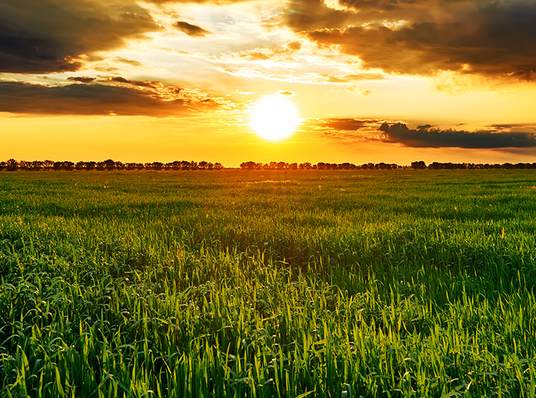 All About Crop Insurance
